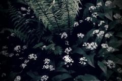 Il giardino incolore 10 - Gianfranco