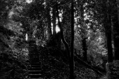 Il giardino incolore 2 - Gianfranco