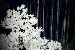 Il giardino incolore 11 - Gianfranco