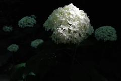 Il giardino incolore 4 - Gianfranco
