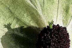 Il giardino incolore 5 - Gianfranco
