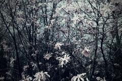 Il giardino incolore 9 - Gianfranco